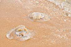 Free Jellyfish Deaths Stock Photos - 19190303