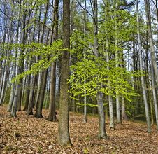Spring Wood Royalty Free Stock Image