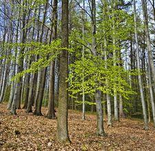 Free Spring Wood Royalty Free Stock Image - 19190306