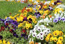Free Flower Garden In The Sunlight Royalty Free Stock Image - 19190546