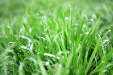 Close Up Of Fresh Thick Grass With Water Drops Stock Photography
