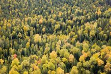 Free Autumn Forest Royalty Free Stock Photography - 19191247