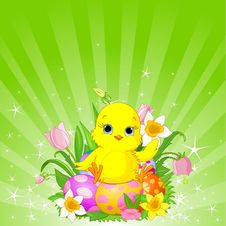 Free Beautiful Easter Chick Background Royalty Free Stock Images - 19191659