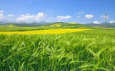 Free China Qinghai Flower And Field Landscape Royalty Free Stock Photo - 19191915