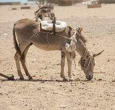 Free Working Donkey In The African Desert Royalty Free Stock Image - 19192636