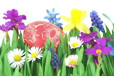 Free Easter Egg On A Spring Meadow Royalty Free Stock Images - 19193529