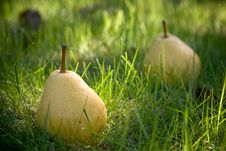 Free Pears Stock Photography - 19195282