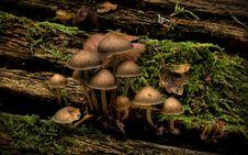 Free Mushrooms Stock Image - 19195811