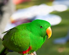 Free Parrot Royalty Free Stock Photos - 19196288