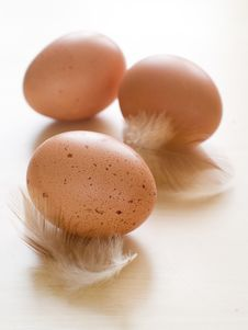 Free Eggs Stock Photos - 19197423