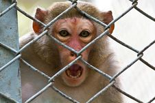 Free Sad Monkey Stock Image - 19198631