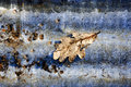 Free Autumn Leaf Abstract Stock Image - 1921321