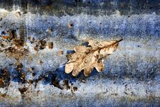 Autumn Leaf Abstract Stock Image