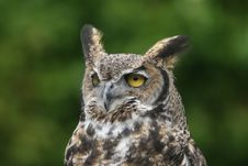 Free Horned Owl 3 Stock Photos - 1922163