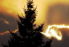 Free Pine Sunset Stock Image - 1924681