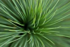 Free Leafy Grass Stock Photography - 1927502
