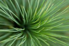 Free Leafy Grass Royalty Free Stock Photos - 1927568