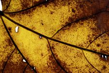 Free Dry Leaf From Autumn Stock Photo - 1929240