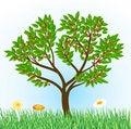 Free Cherry Tree Stock Image - 19203541