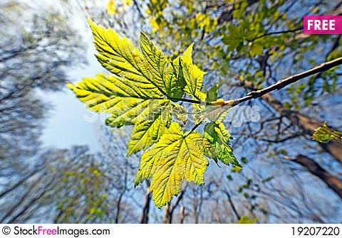 Free Spring Leaf Stock Photo - 19207220