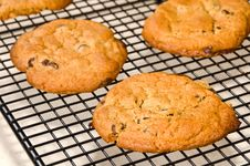 Free Chocolate Chip Cookies Stock Photo - 19202070