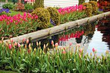 Free Springtime Tulip Garden Royalty Free Stock Photos - 19202558