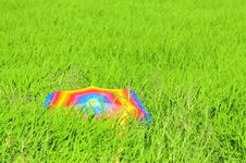 Free Colorful Umbrella And Paddy Fields Stock Image - 19202781