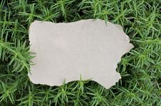 Empty Piece Of Paper And Rosemary Background Stock Images