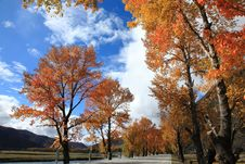 Free Daocheng S Autumn Royalty Free Stock Photography - 19203357