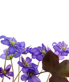 Free Lovely Wild Violet Flowers Royalty Free Stock Images - 19203699
