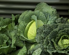 Free Cabbages Stock Image - 19203721