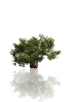 Free High Resolution Tree Isolated Stock Photo - 19204050