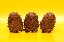 Free Cedar Cones Stock Photo - 19204360