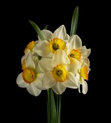 Free Bunch Off Narcissus Royalty Free Stock Image - 19205706
