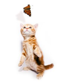 Free Kitty And Butterfly Stock Photography - 19206032