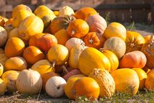 Free Ripe Pumpkins Stock Photo - 19206160