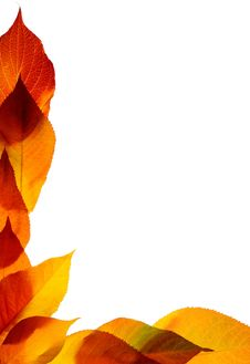 Free Autumn Leaves Royalty Free Stock Photography - 19206227