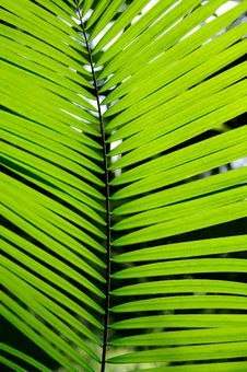 Free Palm Leaf Royalty Free Stock Images - 19206239