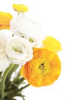 Free Beauty Flowers Royalty Free Stock Photos - 19207558