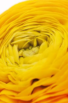 Free Orange Flower Close Up Stock Photos - 19207573