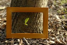 Free The Brown Wood Frame Royalty Free Stock Image - 19208406