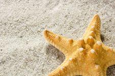 Free Golden Starfish Royalty Free Stock Photos - 19208618