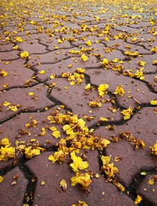 Free Tiny Yellow Flowers Falling Stock Photos - 19209253
