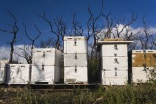 Free Beehives And Burnt Bush Stock Images - 19209434