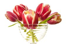 Free Bouquet Of Pink Tulips Stock Photography - 19209742