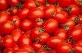 Free Tomatoes Royalty Free Stock Image - 19210146
