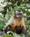 Free Monkey Royalty Free Stock Photography - 19210467