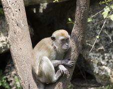 Free Monkey Stock Photos - 19210443