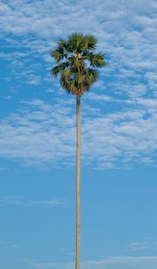 Free Tropical Coconut Palm Stock Images - 19210494