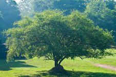 Free Tree Royalty Free Stock Photo - 19210515